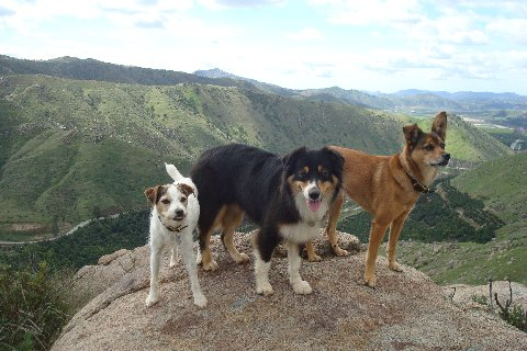 San Diego dogs hike
